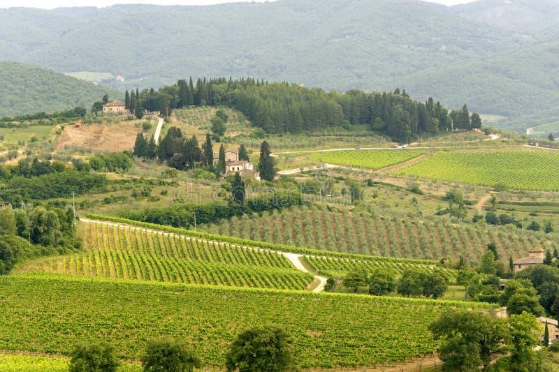 Vigne di Chianti (Toscana) fotografie stock