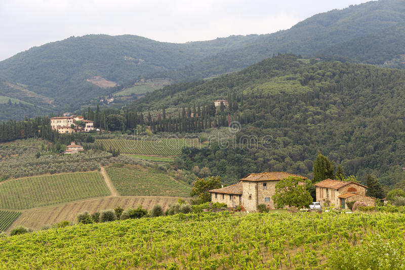 Vigne di Chianti (Toscana) fotografie stock libere da diritti