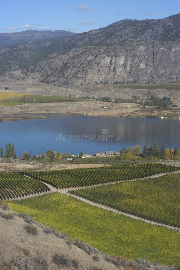 Vigne di Okanagan immagine stock