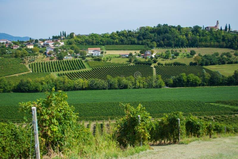 Vigne di Valdobbiadene, Veneto, Italia immagini stock
