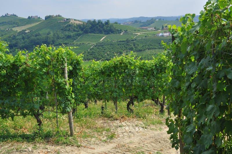 Vigne e colline della regione di Langhe Piemonte, Italia fotografia stock