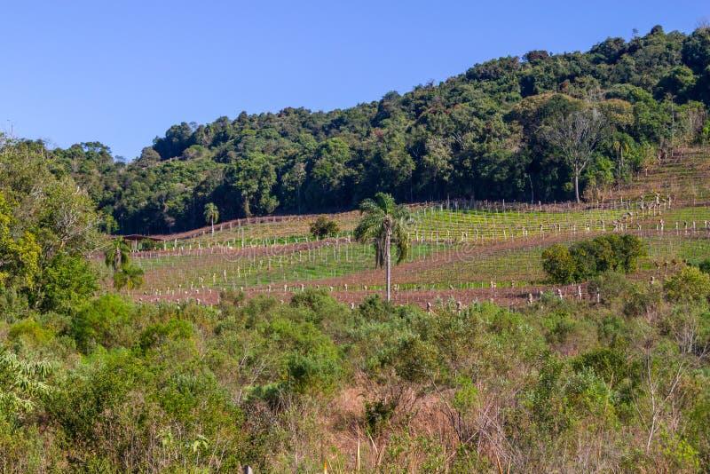Vigne ed aziende agricole nell'inverno, valle del DOS Vinhedos di Vale fotografia stock