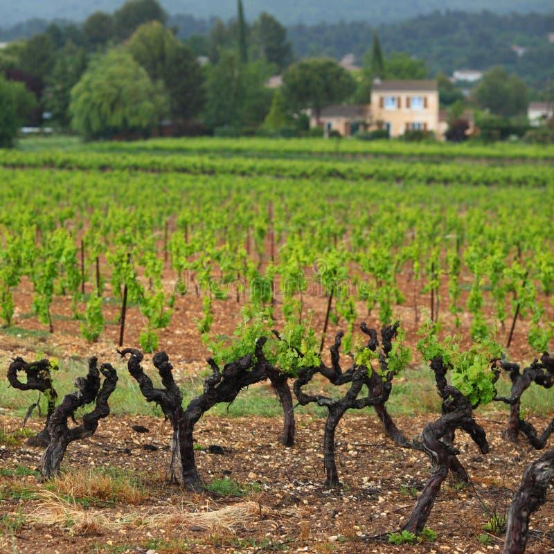 Vigne en France images libres de droits