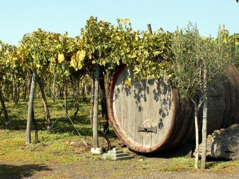 Vigne en Italie image stock