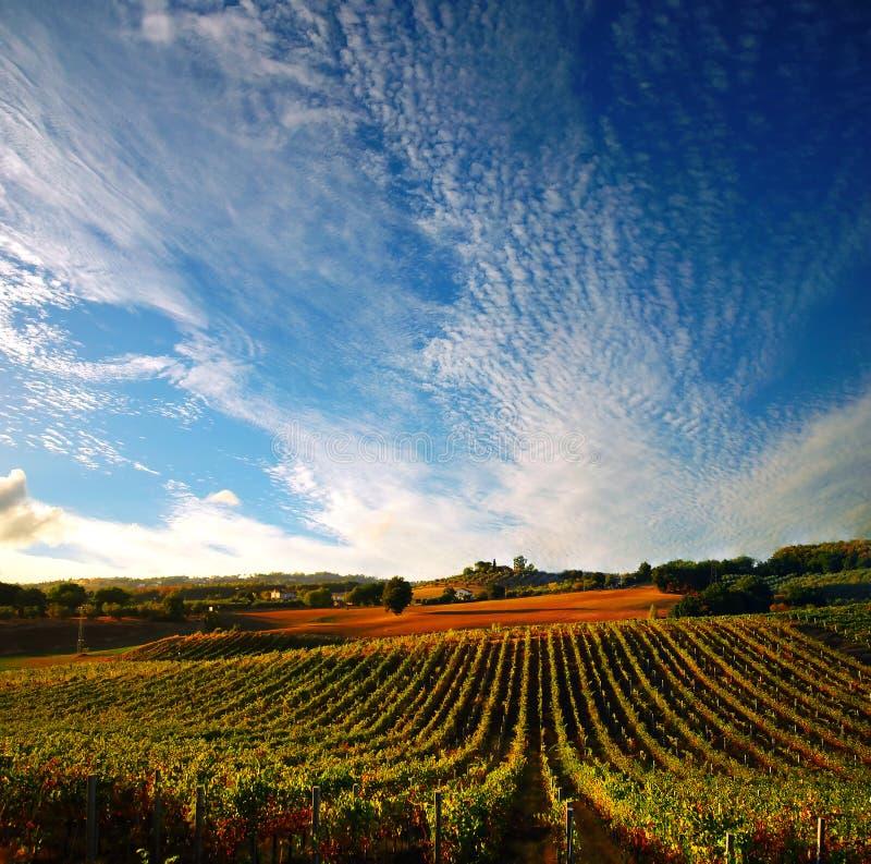 Vigne en Italie images libres de droits