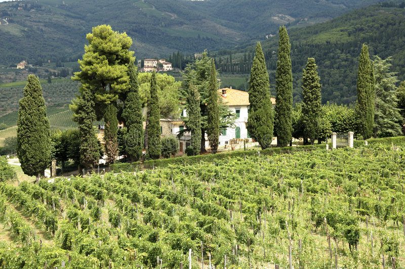Download Vigne en Toscane photo stock. Image du tuscany, maison - 727788