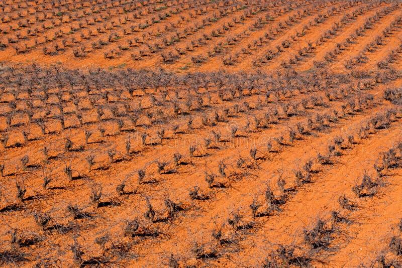 Vigne espagnole image libre de droits