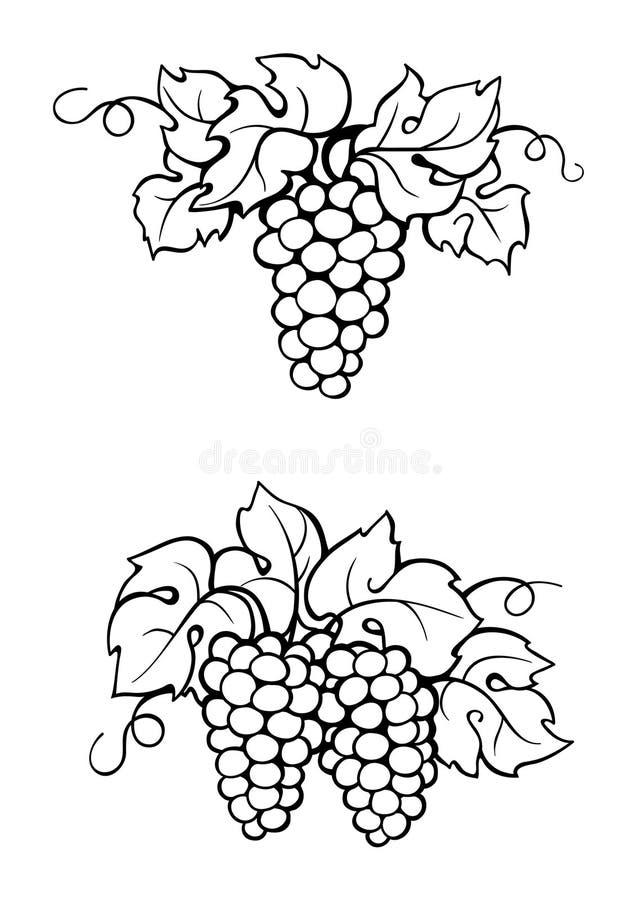 Vigne et feuilles de dessin illustration stock illustration du retrait peinture 104040230 - Feuille de vigne dessin ...