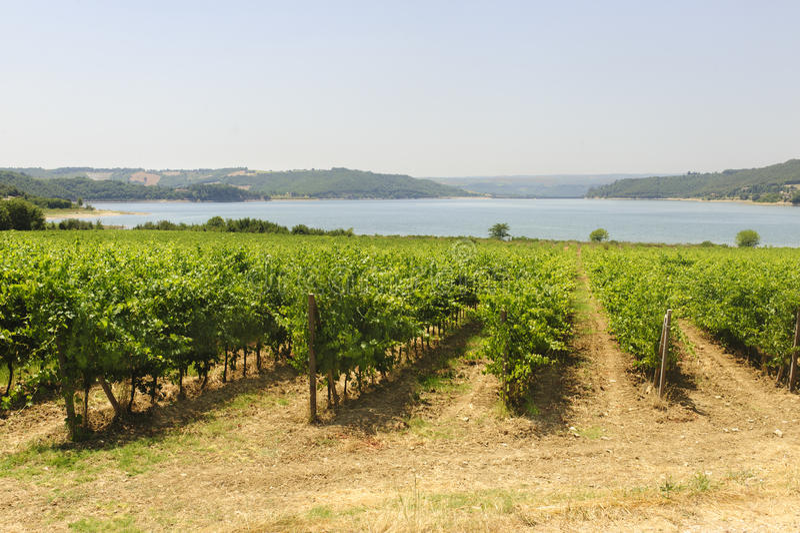 Vigne et lac en Ombrie photo libre de droits