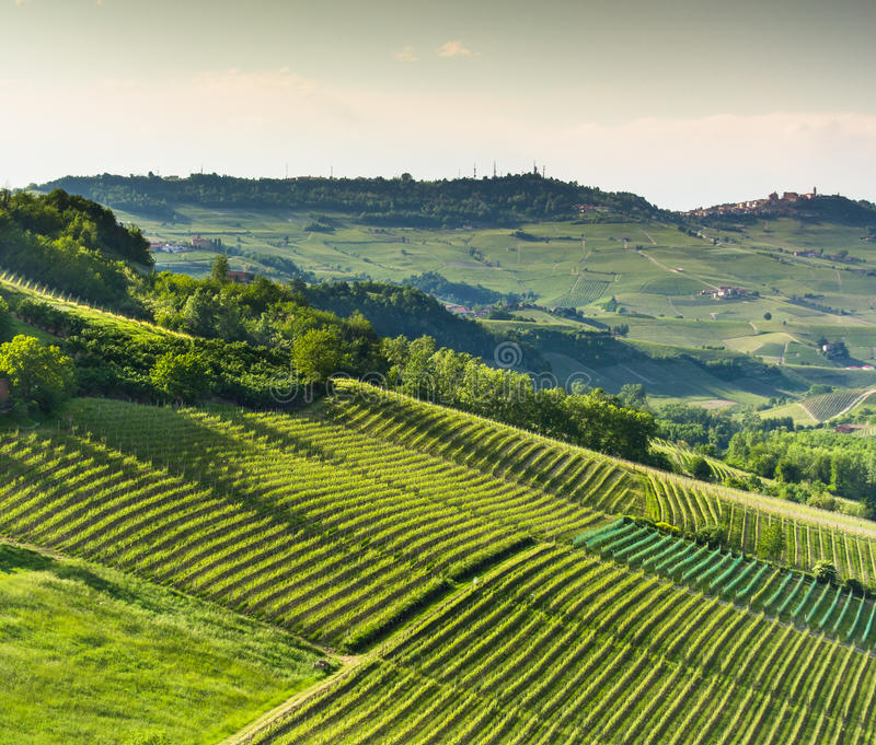 Vigne italiane in Langhe, Piemonte immagine stock libera da diritti