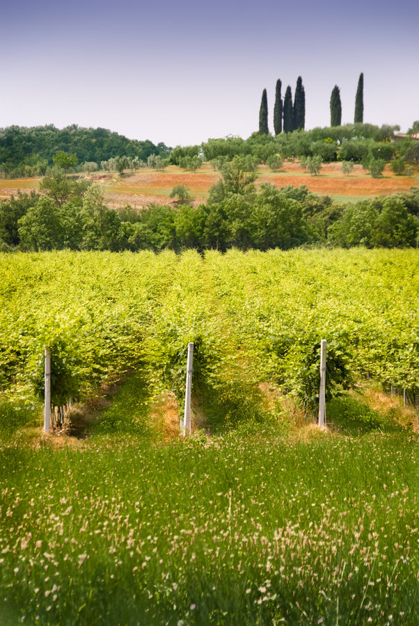 vigne italienne photographie stock