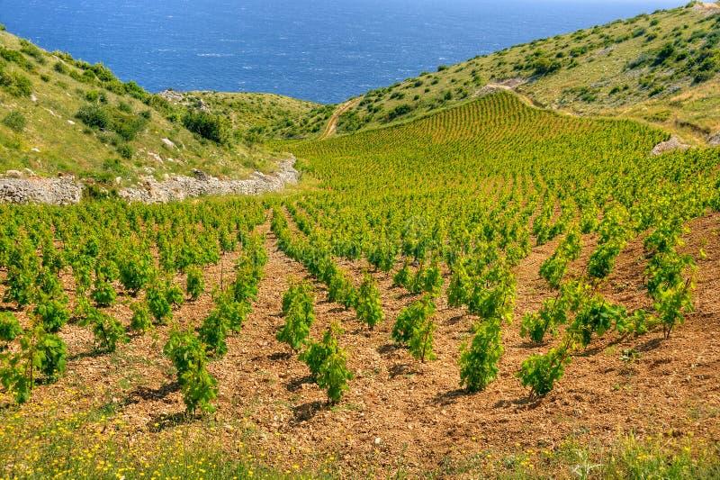 Vigne, litorale del sud dell'isola di Hvar, ad ovest di immagini stock libere da diritti