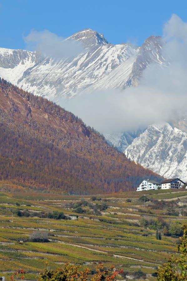 Vigne nelle montagne fotografie stock