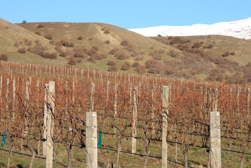 Vigne, Nouvelle Zélande photo libre de droits