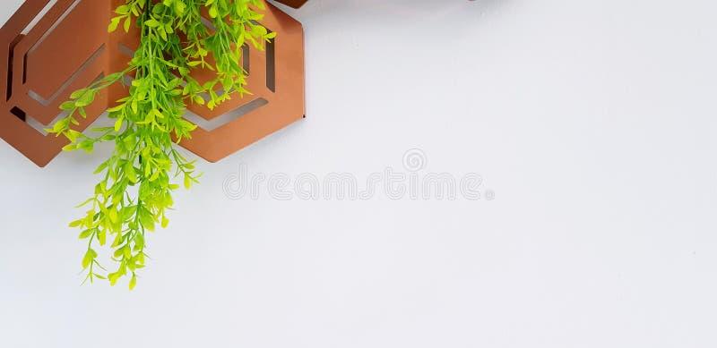 Vigne, plante grimpante ou feuilles verte avec l'acier inoxydable brun moderne ou l'objet de cuivre pour la maison décorée photos libres de droits