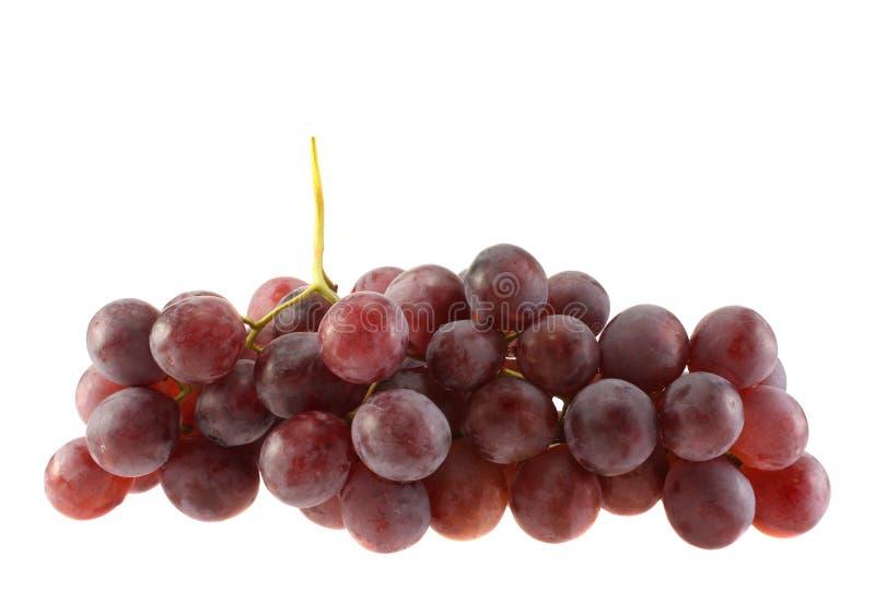 vigne rouge photo stock