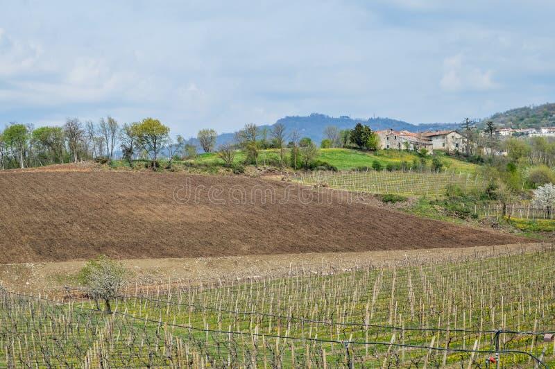 Vigne sulle colline dell'area di Soave vicino a Verona in Italia del Nord immagini stock libere da diritti