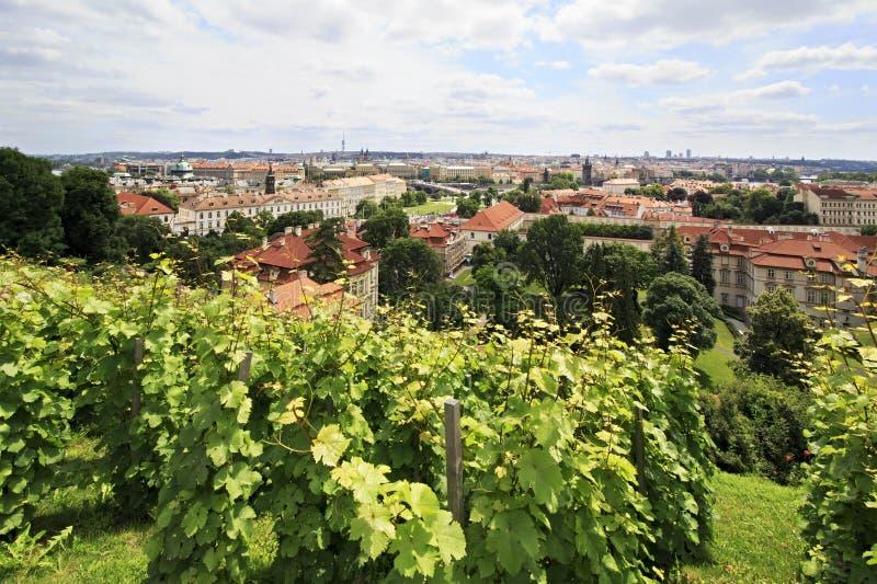 Vigne sur les collines à Prague. image stock