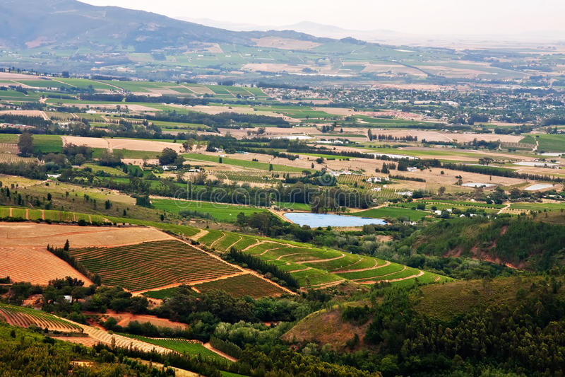 Vigne in valle fertile fotografia stock libera da diritti