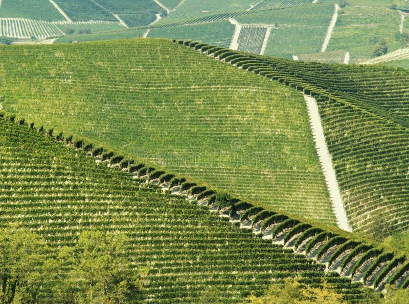 Vigne verdi astratte fotografia stock libera da diritti