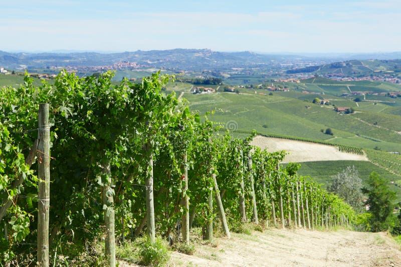 Vigne verdi e vista delle colline di Langhe dell'italiano in un giorno soleggiato fotografia stock libera da diritti