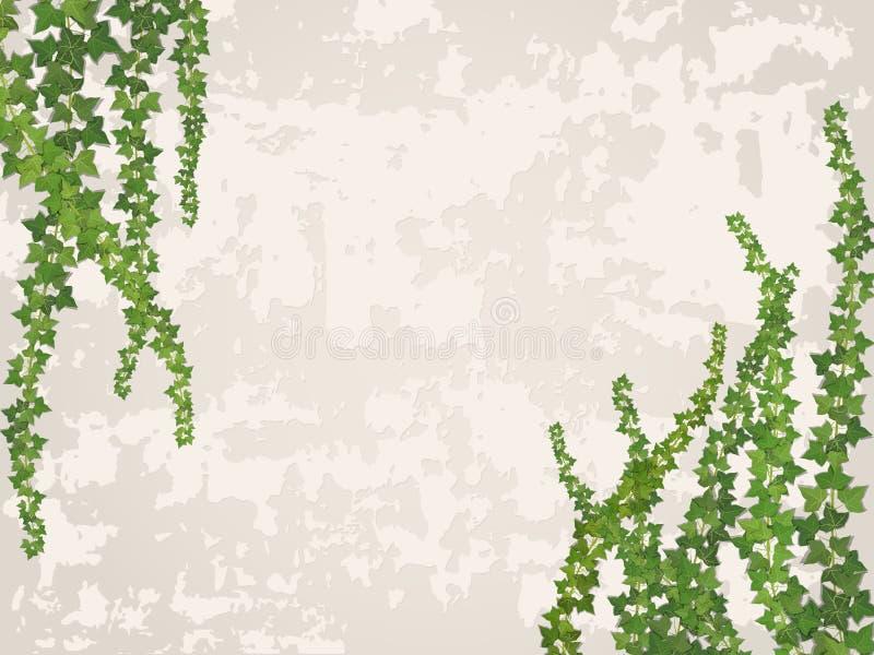 Vignes accrochantes sur le fond du vieux mur de stuc illustration stock