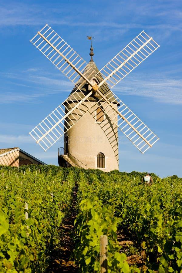 Vignes avec le moulin à vent, France photo libre de droits