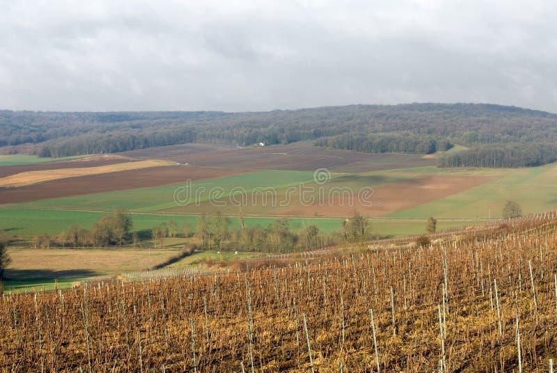 Vignes, Champagne, France photo stock