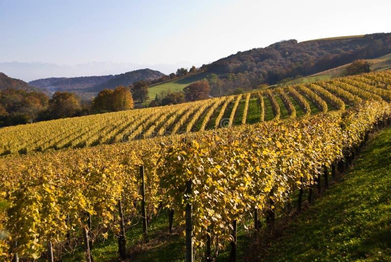 Vignes dans le sud-ouest France photo stock