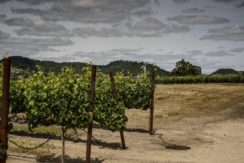 Vignes dans Napa la Californie images libres de droits
