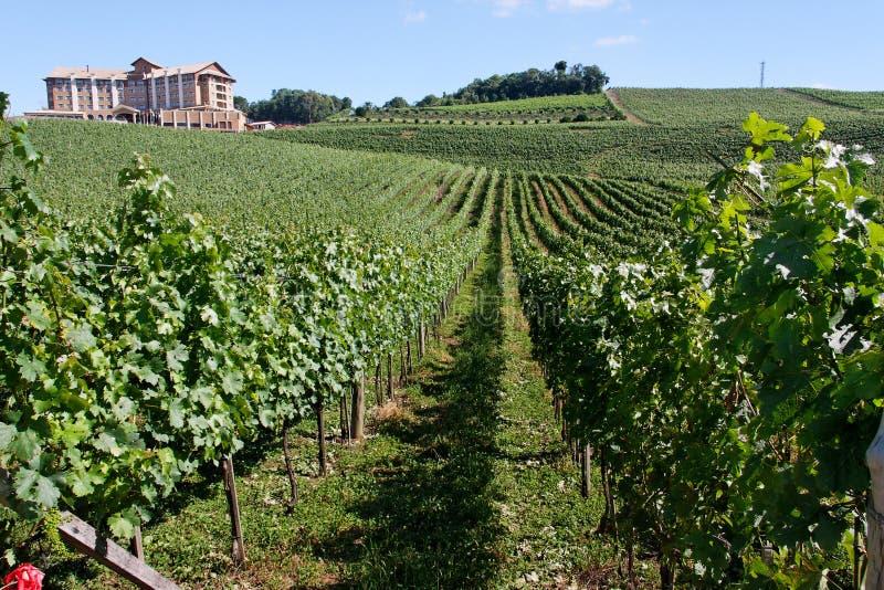 Vignes de Bento Goncalves images stock