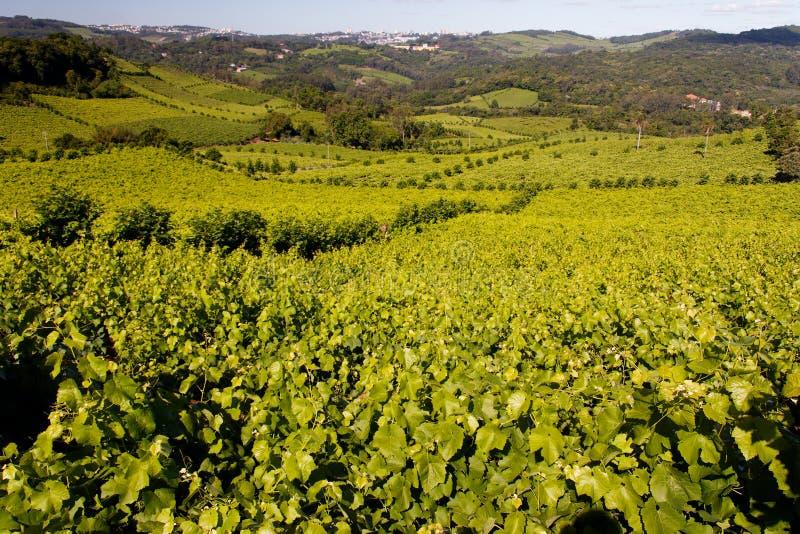 Vignes de Bento Goncalves photographie stock