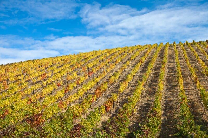 Vignes de Douro images stock