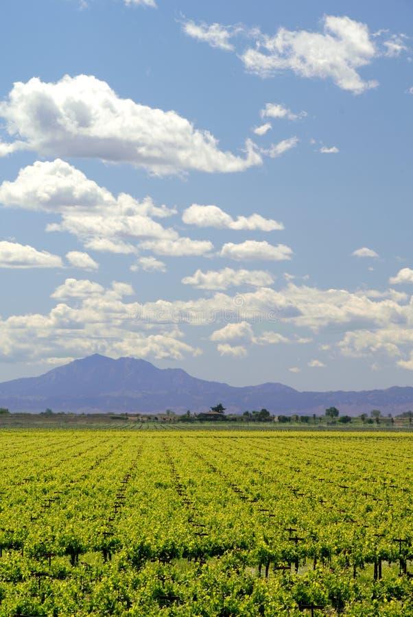 Vignes de la Californie images stock