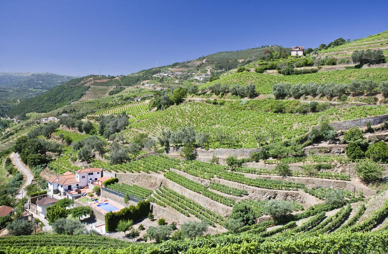 Vignes de la vallée de Douro images libres de droits