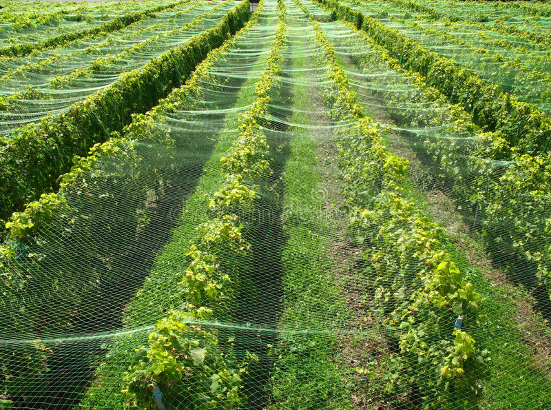 Vignes de Lavaux (Suisse) photographie stock