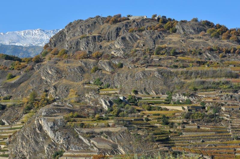 Vignes de montagne photographie stock libre de droits