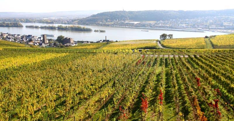 Vignes de Ruedesheim photographie stock libre de droits