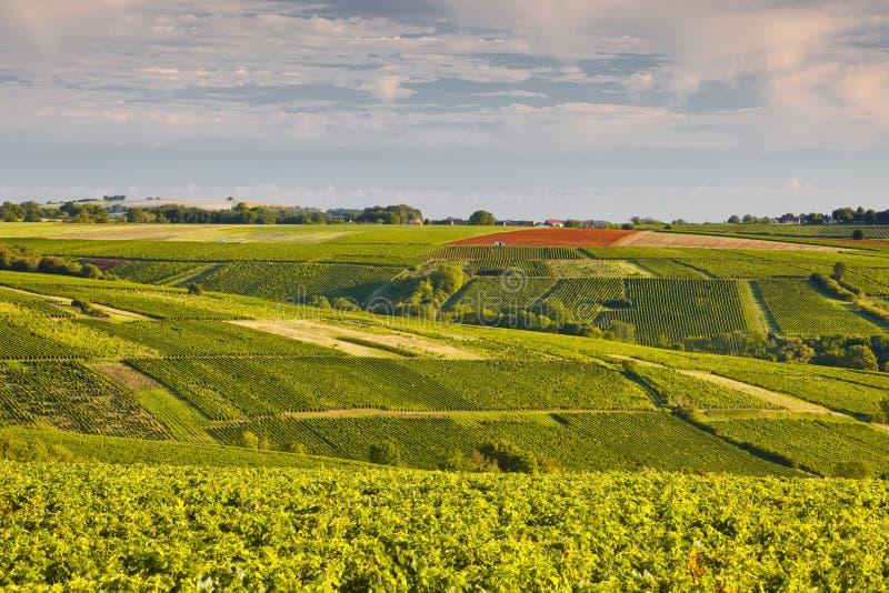 Vignes de Sancerrois images stock