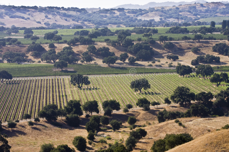 Vignes de vallée de Santa Ynez image stock
