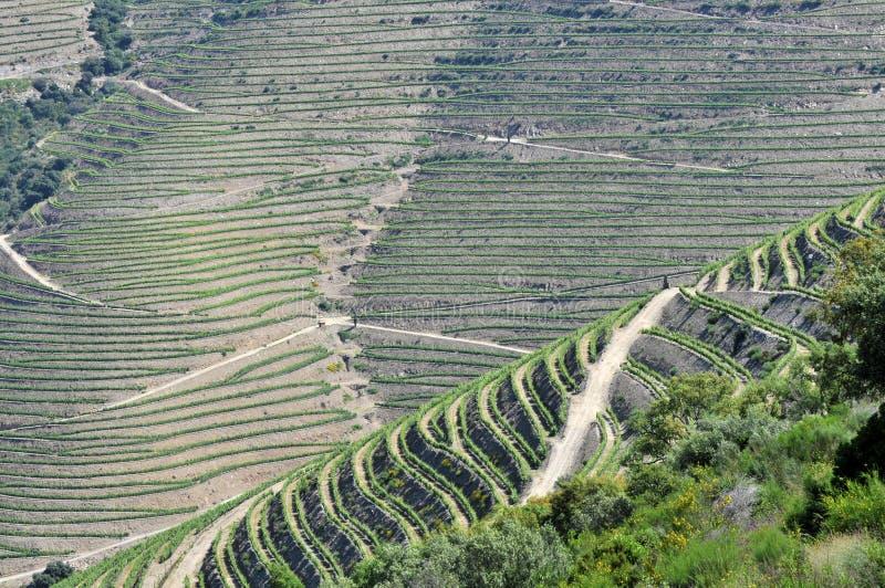 Vignes, douro Portugal photos libres de droits