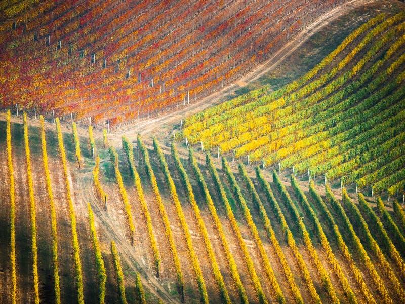 Vignes en automne photographie stock