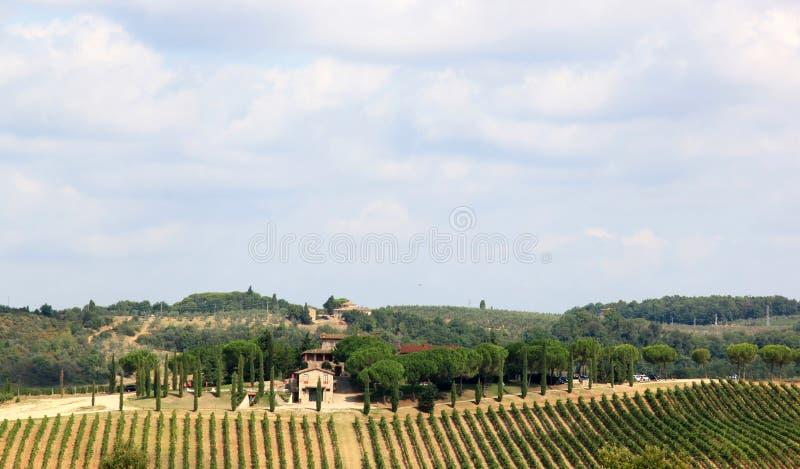 Vignes en Badia di Passignano, Toscane, Italie photo stock
