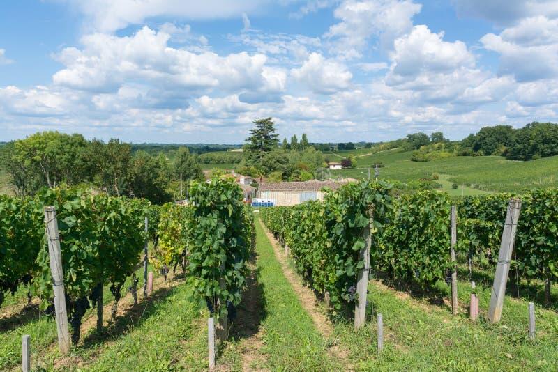 Vignes en France photographie stock libre de droits