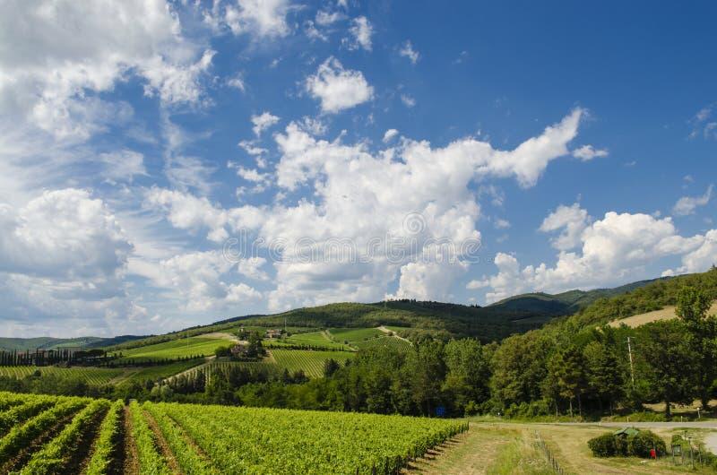 Vignes en Toscane images stock