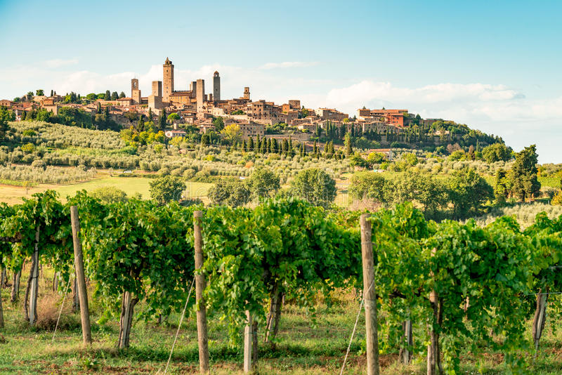 Vignes en Toscane photo stock