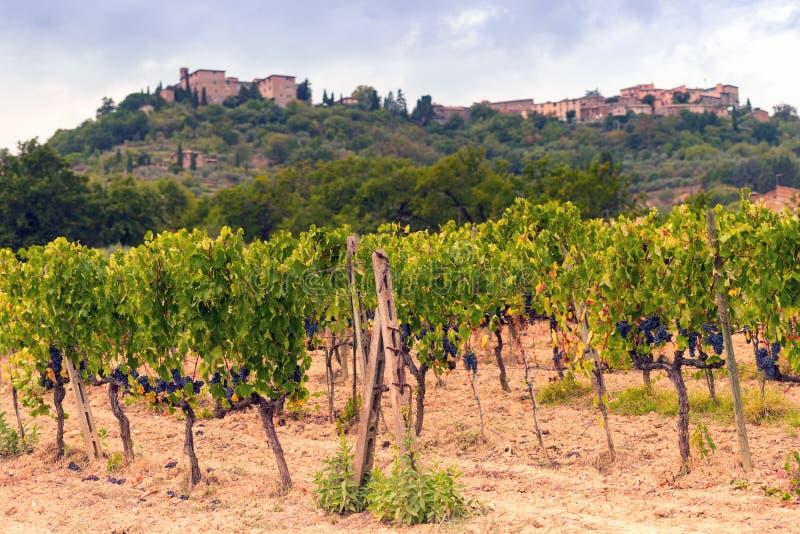 Vignes en Toscane image libre de droits