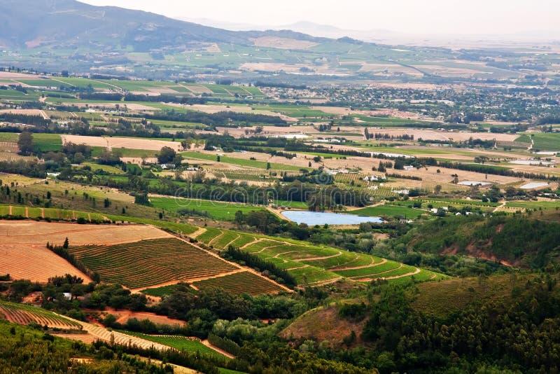 Vignes en vallée fertile photographie stock libre de droits