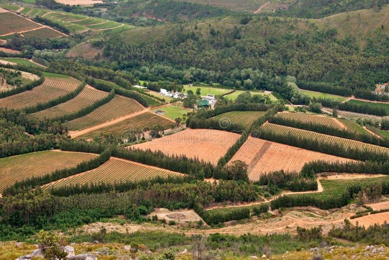 Vignes en vallée fertile image stock