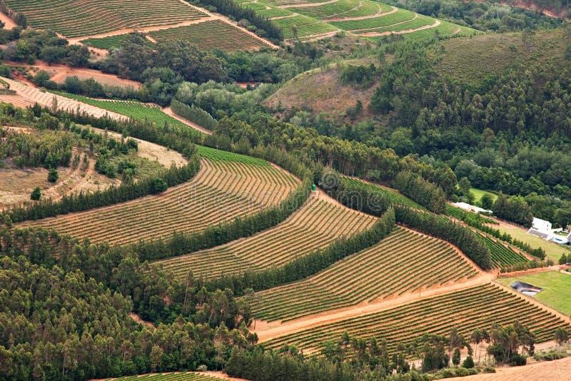 Vignes en vallée fertile images libres de droits